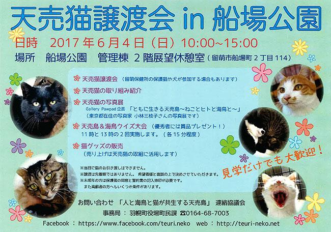 天売猫譲渡会 in 船場公園